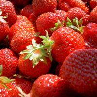 Reife Erdbeeren aus der Mondsee-Region