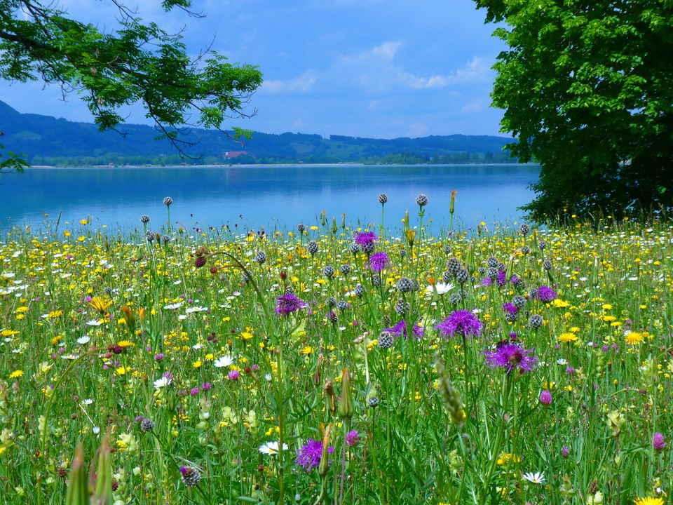 Обои луг район цветущий  раздел Природа размер